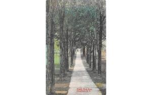 Maple Tree Row Stamford, New York Postcard