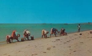 Native Women Catching Cockles Beach Mozambique African Postcard