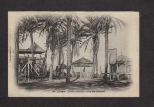 Alger Algers Algeria Jardin d'Essais Oasis des Palmiers Carte Postale France