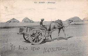 Yemen Aden attelage, Camel Carriage, Native Man 1910