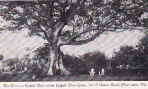 Florida Clearwater The Famous Kapok Tree at The Kapok Tree Grove North Haines...