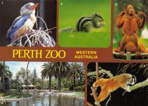 Postcard, Multi View  PERTH ZOO, Western Australia, Wild Animals 84Z