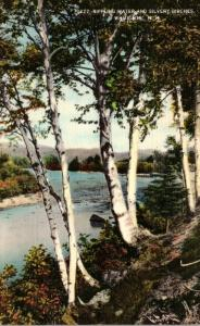 New Hampshire White Mountains Rippling Water and Silvery Birches