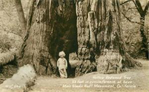 California 1930s Hollow Redwood Tree Muir Woods RPPC Photo Postcard 3825