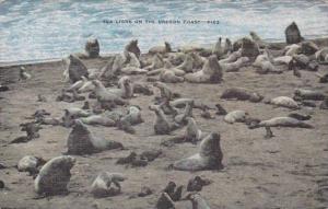 Oregon Sea Lions On The Oregon Coast