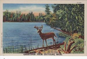 Michigan Greetings From Cadillac Curteich