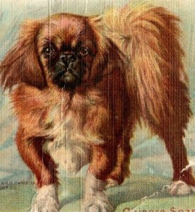 1900s Dwight's Soda New & Champion Dog Series Chinese Spaniel Lot Of 4 P222