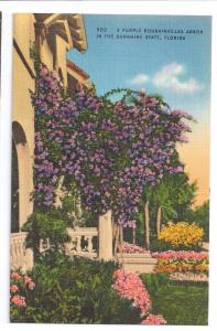 Bougainvillea Arbor Florida FL Vintage Linen Postcard