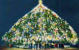 NC - Wilmington. World's Largest Living Christmas Tree