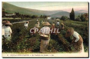 Old Postcard Collection Jasmine Cote d & # 39Azur