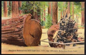 CA RICHARDSON GROVE Giant Redwood was 320 ft High Diam 13.8ft Age 1250 Years