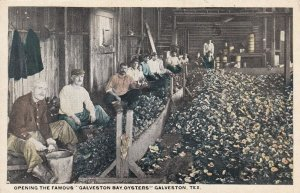 GALVESTON, Texas, 1900-10s; Opening the Famous Galveston Bay Oysters