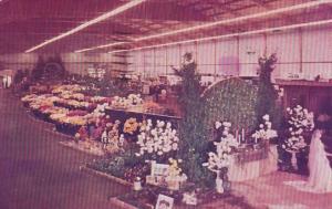 California San Mateo Flower Fiesta 1952