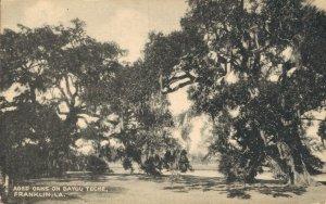 USA Aged Oaks On Bayou Teche Franklin Louisiana 05.12