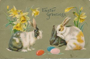 Easter Greetings - Colored Rabbits inspecting Colored Eggs - DB