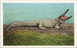 Big Joe Man Eater Osky's Alligator Store Jacksonville Florida FL Postcard E47