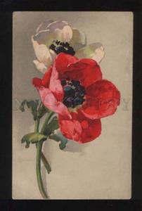 054002 POPPY by C. KLEIN vintage Meissner & Buch Colorful PC