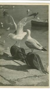 Sea Gulls on Sea Shore, old unused real photo Postcard