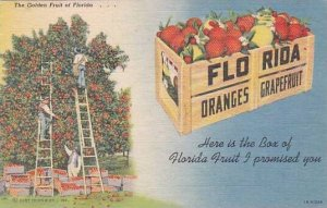 Florida The Golden Fruit Of Florida Here Is The Box Of Florida Fruit And Prom...