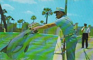 Florida Marineland Textbooks Are A Must For Any Student Including The Porpois...