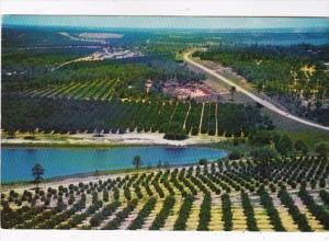 Florida Clermont Citrus Groves and Lakes As Seen From The Citrus Tower