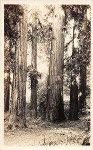 F38/ La Honda Canyon California Postcard RPPC c1920s Big Tree Inn