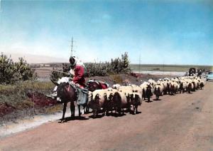 Caravan, Lebanon Postcard, Carte Postale Caravan Caravan Caravan