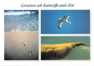 Netherlands Groeten uit Katwijk aan Zee Sea Waves Beach Footprints Bird