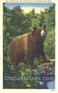 Pacific Northwest Bear Postcard Bear Post Card Old Vintage Antique  Pacific N...