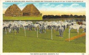 LP72 Sarasota  Florida Postcard Ringling Brothers Circus Horses  Winter Quarters
