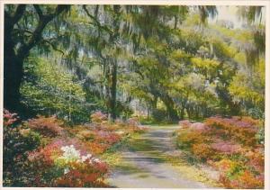 Florida Largro Springtime Along The Gulf Coast Of Florida