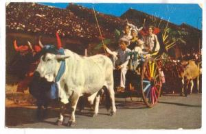 Colorful adorned oxcart, with polleras and Montunos, during parade, Panama, 4...