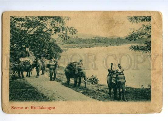 147329 Malaysia Kuala Kangsar KUALAKANGSA elephants Vintage