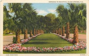 Silver Springs Florida~Entrance to City~Flowered Median Bewteen Roads~1940 Linen