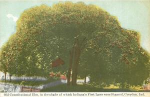 Corydon Indiana~Old Constitutional Elm~Indianas First Laws Were Framed Here~1910