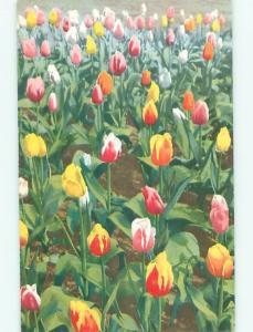 Divided-Back BEAUTIFUL FLOWERS SCENE Great Postcard AA3400