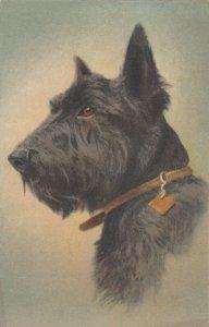 DOG ; Scottie Terrier , 1930s