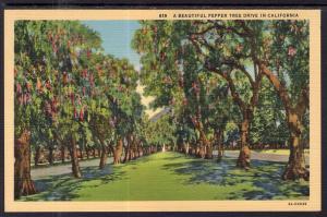 Pepper Tree Drive in California