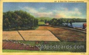 Cranberries Farm Farming, Farm, Farmer, Postcard Postcards Cranberries Planta...