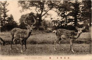 CPA Deer at Kasuga, Nara JAPAN (725457)