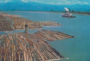 Paddle Steamer & Log Booms Pit Meadows BC Canada Canadian Postcard