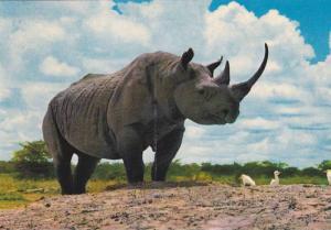 Rhinoceros , African Wild Life , KENYA , 50-70s