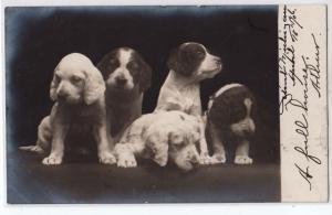 RPPC, Puppies