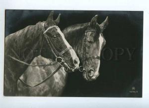 215013 Two Friends HORSE Heads Vintage PHOTO RPH postcard
