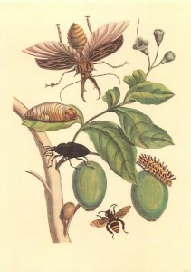 Postcard insectarium insects plants bugs caterpilar butterfly larva leafes bees