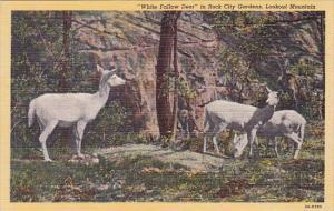 White Fallow Deer In Rock City Gardens Lookout Mountain Colorado