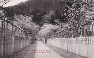 The Cherry Bloosom, St. Kotohira Sanuki, Japan, 1900-1910s
