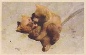 Zoo Bear cubs playing , Skansen , Stockholm , Sweden, 30-40s