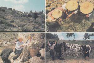 Portugal Women Shearing Pouring Hot Water On The Wool Postcard