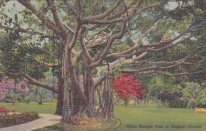 Giant Banyan Tree In Tropical Florida